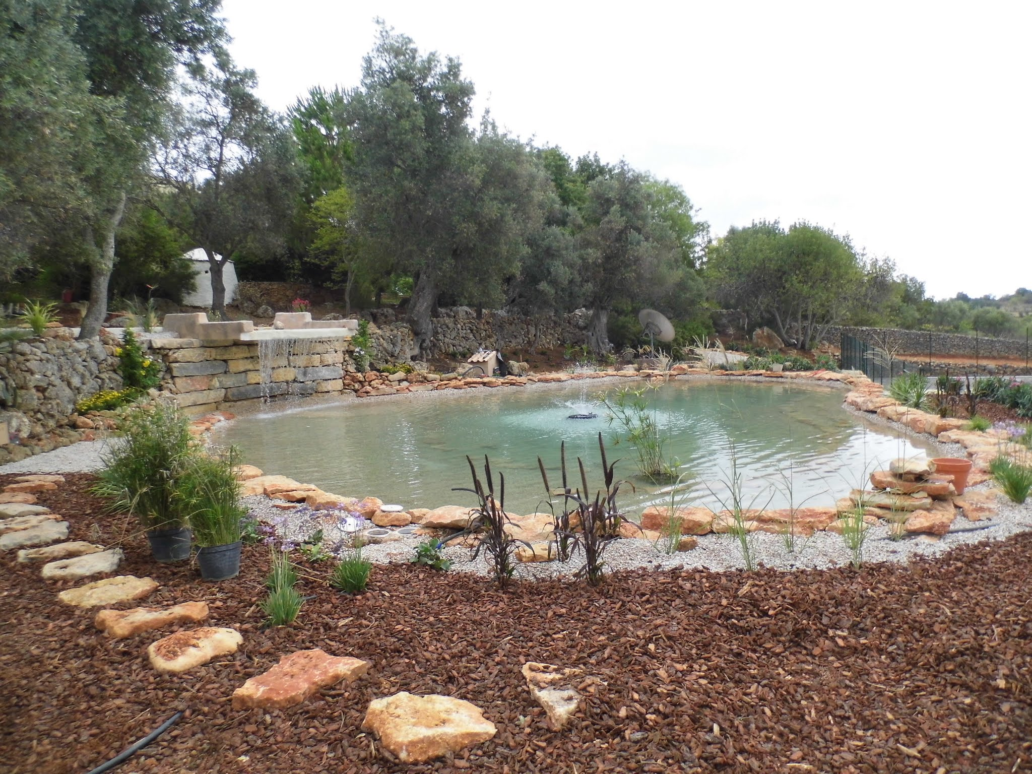 Pond Stars UK Natural Swimming Pool