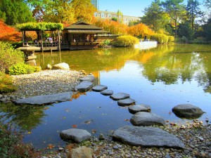 The pond is the most dominant part of this Japanese Garden