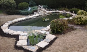 Pond Projects