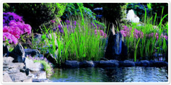 how to keep pond plants alive over winter