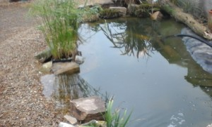 Ground Level Koi Pond, with natural stone edging.