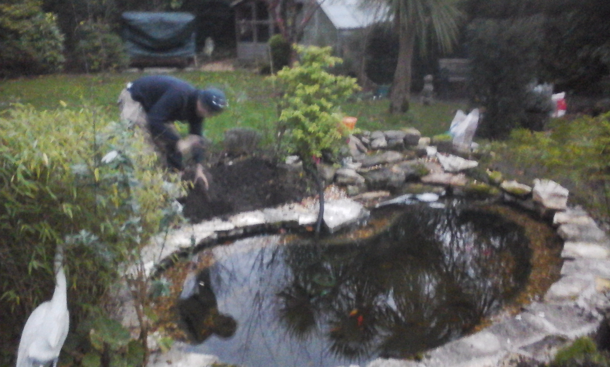 Pond Maintenance - Pond Stars UK - Dorsets Leading Pond Care Company