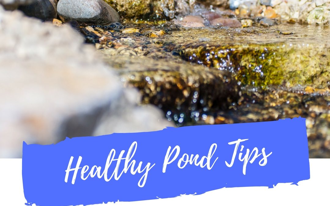 Top Ten Tips for a Healthy Pond